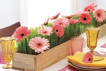 Tabletop Decorating / by Michelle Brady