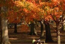 Fabulous Fall!!!!!!! / by Judy Gurney