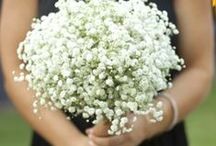 Baby's Breath / DIY Baby's Breath (Gypsophilia) arrangments. Tutorials and inspiration. / by BloomsByTheBox.com