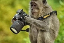 Where are the monkeys?
