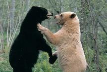 Brother Bear / by Italo Piccolo