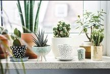 Succulentes <3