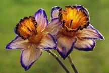 Flowers / by Deborah Nanney