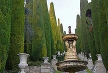 {Beautiful Gardens and Trees} / by Shandy Burton ♞ Morgan de Grey