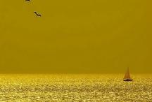 Yellow / by Deborah Nanney