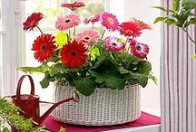 Flower Arrangements / by Deborah Nanney