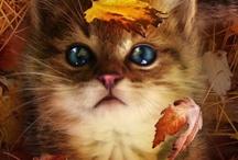 Gatos/Cats / by Andrelisa Davila