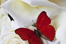Red and White / by Deborah Nanney