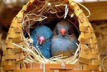 For The Birds / by Deborah Nanney