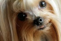 Dogs / by Elisheva Shields