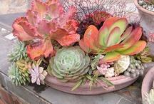 Succulents / by Deborah Nanney