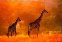 Orange You Lovely / by Deborah Nanney