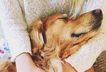 Puppy Love / by Julie C