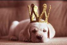 Puppies + Doggies