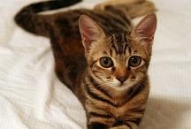 Kitties!! / by Lori Fitz