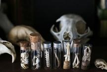 Skeletal Skulls / by Molly Baber