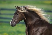 Horses / by Patti Umlauf