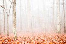 autumn  / by Kaitlyn Ray