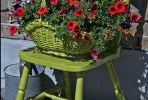 Gardening / by Donna Cefole Maillet
