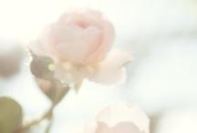 Petals / by Molly Baber