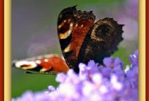 Macro Photography / Macro Photography from both Coombe Mill Farm Holidays and skilled photographers.