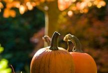When The Frost Is On The Pumpkin / Autumn . . . In All It's Glory . . .
