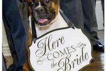 Weddings ; Bridgeport Valencia Clubhouse / LA wedding photographer  #classicwedding #romanticwedding #pinterestwedding #innesphotography #LAweddingphotographer www.innesphotography.com