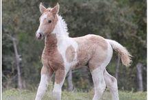 Bashkir Curly-Coated Horses