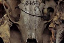 Anatomical/Curiosities / by Tori Weinstock