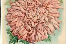 Naturalia illustrated / Old ilustrations of flora and fauna... (love)