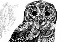 For the love of OWLS