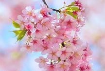 Spring/Spring decor