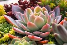 Pflanzen/Plants / All kind of plants including succulents, roses, .... All kind of nice plants