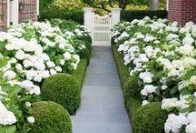 Gardens in Veranda / by Veranda Magazine