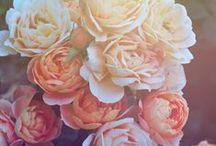 Bouquets & Flowers / by Chels Waite