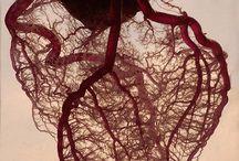 Medical / by Olivia Long