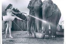 Vintage Circus / by Ishshah Fluker