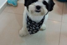Fredelicious / My beloved dog! Frederico!