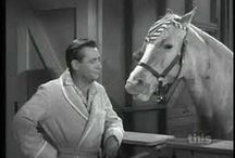 Hooray for Hollywood - Mr Ed / Hollywood, Celebrities, Television, Mr Ed / by Jan N