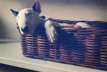 + Pups +