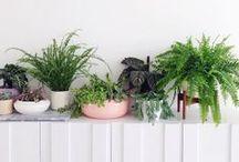 HOME / plants