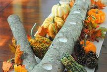 fall & harvest ideas. / by Lauren Lewis