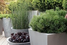 Container Gardens / by Organized Design Amy Smith