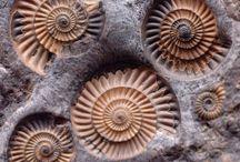 Ancient / Prehistoric