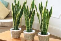 Plants / Tips and tricks for growing plants - mainly houseplants.