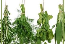 Herb Garden / Everything under the sun about herb gardening and what to do with harvested herbs