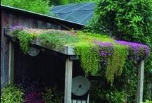 Dolç exterior / Sweet Outside home