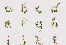 Fonts / by Kristina Reynolds-Haney