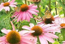 Butterfly Garden / by Andrea Figlewicz