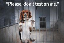 Cruelty Free Beauty & Fashion / Beauty products, clothes, bags, etc. NOT tested on animals and vegan